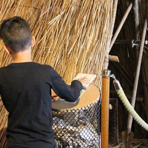 Jeu de découverte des plantes du marais dans la Cabane Verte