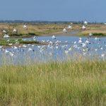 La reserve naturelle Moeze-Oleron