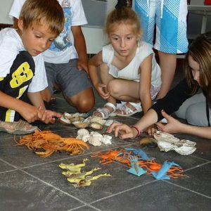 scolaires-enfants-primaires-classification-animaux-marins-la-cite-de-lhuitre-marennes