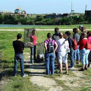 Visite animée de la ferme ostréicole
