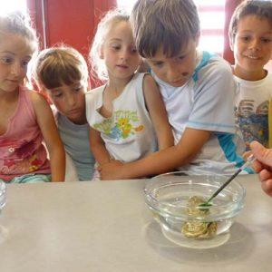 Atelier mer et sciences pour les enfants